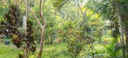 Kumarakom-Resorts-00148