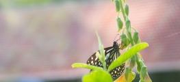 Kumarakom-Resorts-00153